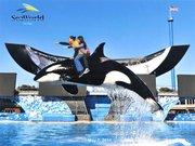 Under the Sea: SeaWorld San Diego