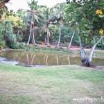 Alexis-Hawaii-2011-162