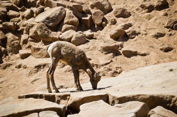 san-diego-safari-park-2013-4053-3