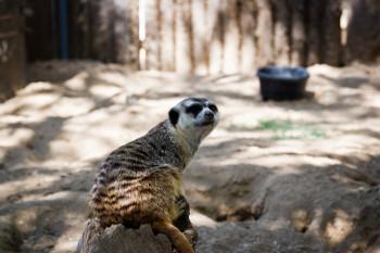 san-diego-safari-park-2013-4058-4