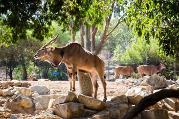 san-diego-safari-park-2013-4084-10