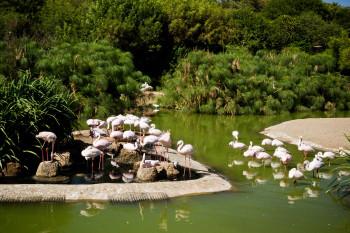san-diego-safari-park-2013-4090-13