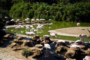 san-diego-safari-park-2013-4092-14