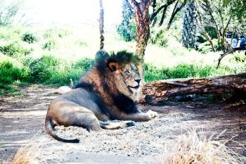 san-diego-safari-park-2013-4097-15