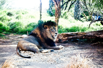 san-diego-safari-park-2013-4098-16