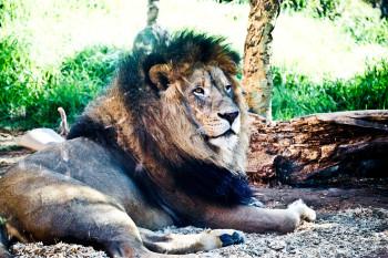 san-diego-safari-park-2013-4101-17