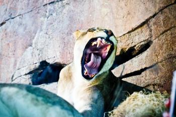 san-diego-safari-park-2013-4108-20