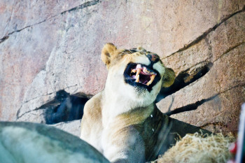san-diego-safari-park-2013-4109-21