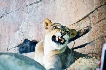 san-diego-safari-park-2013-4110-22