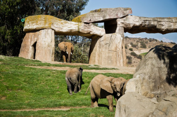 san-diego-safari-park-2013-4112-23