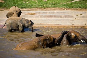 san-diego-safari-park-2013-4135-24