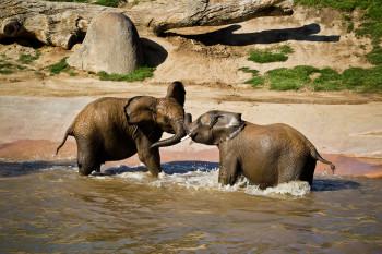 san-diego-safari-park-2013-4140-25