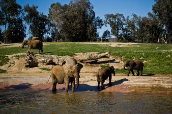 san-diego-safari-park-2013-4148-26