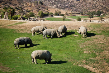 san-diego-safari-park-2013-4154-27