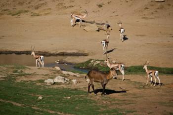 san-diego-safari-park-2013-4162-28