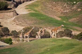 san-diego-safari-park-2013-4166-29