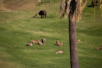 san-diego-safari-park-2013-4168-30