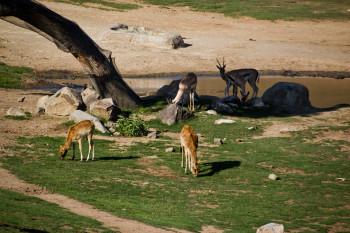 san-diego-safari-park-2013-4171-31