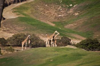 san-diego-safari-park-2013-4175-32
