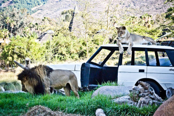 san-diego-safari-park-2013-4177-33