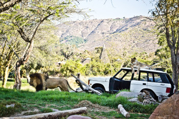 san-diego-safari-park-2013-4178-34