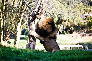 san-diego-safari-park-2013-4180-35
