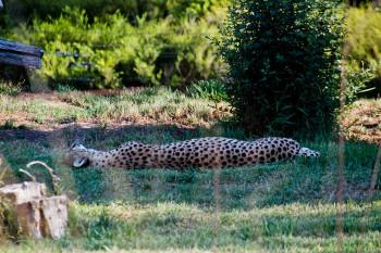 san-diego-safari-park-2013-4181-36