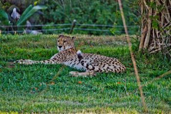 san-diego-safari-park-2013-4183-37