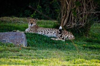 san-diego-safari-park-2013-4186-38