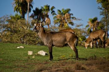 san-diego-safari-park-2013-4189-39