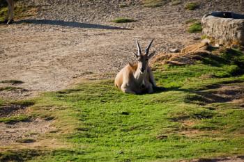 san-diego-safari-park-2013-4210-41