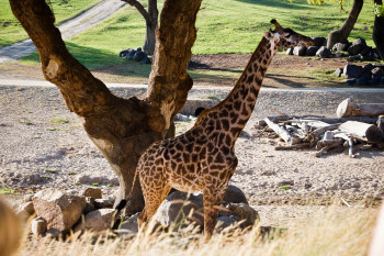 san-diego-safari-park-2013-4214-42