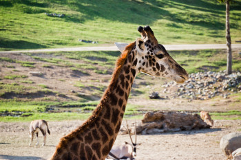 san-diego-safari-park-2013-4223-43
