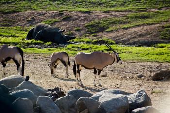 san-diego-safari-park-2013-4228-44