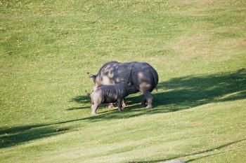 san-diego-safari-park-2013-4238-47
