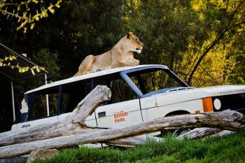 san-diego-safari-park-2013-4246-48