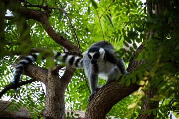 san-diego-safari-park-2013-4262-49