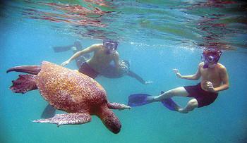 snorkeling-galapagos-travel